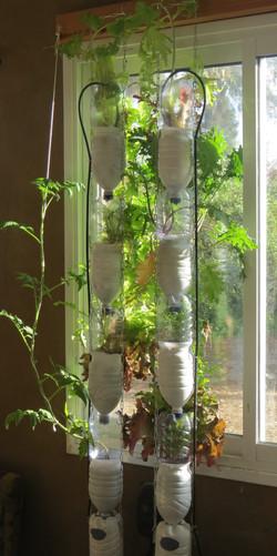חוות חלון בשמש של בוקר