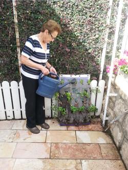 סבתא שותלות ומשקה כיסשתיל לבית