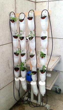 חוות חלון לניסויים 16 צמחים.jpg