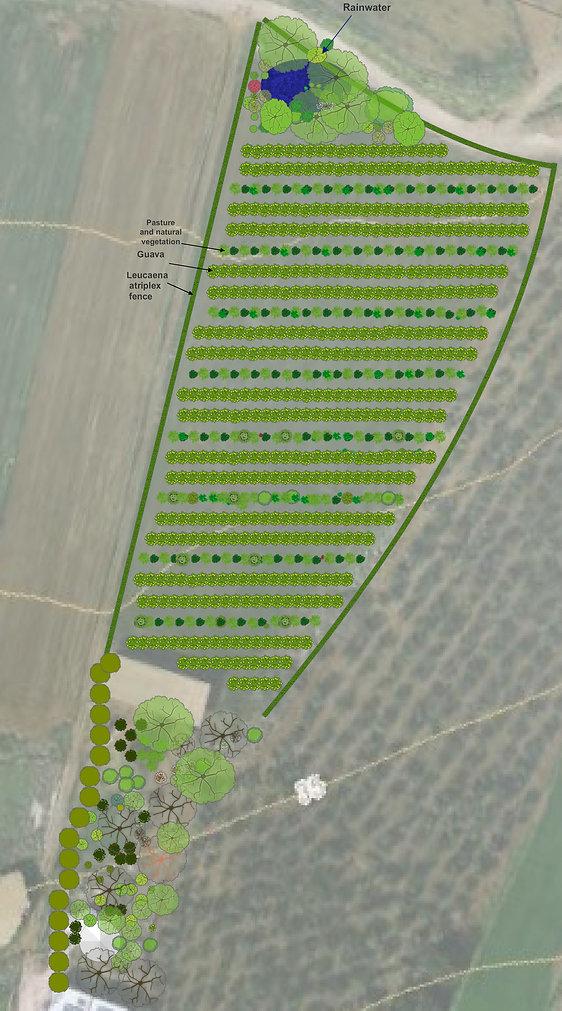 תכנון משק חקלאי לחקלאות בת קיימא