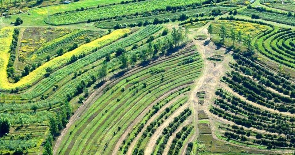 חקלאות יערנית בתכנון פרמקלצ'ר