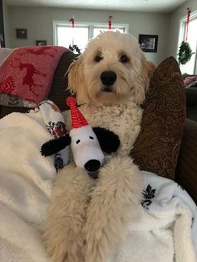 lulu at christmas.jpg