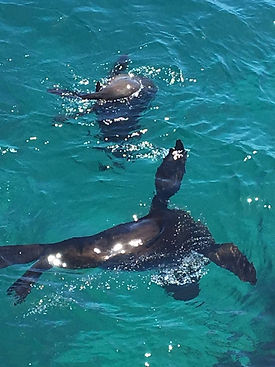 Seals Capetown South Africa