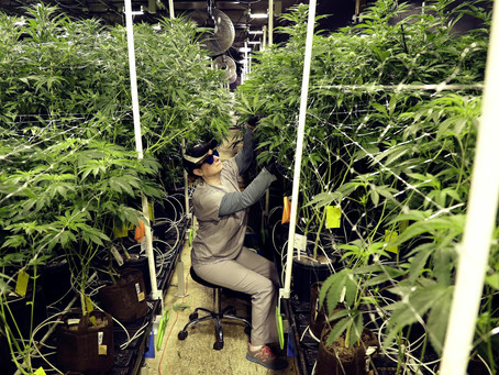 New Jersey governor signs laws to legalize marijuana use, decriminalize possession
