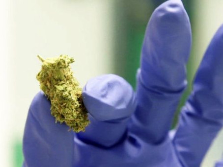 Faster access to cannabis medicines in UK