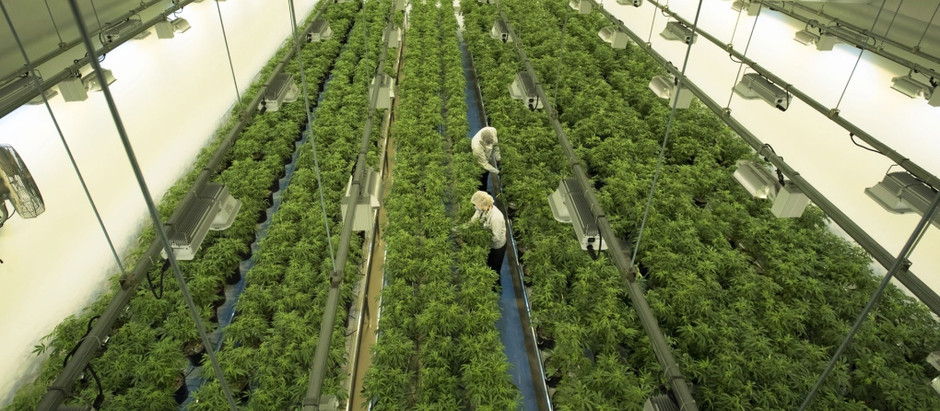 Canopy's 'new vision' pivots strategy from 'first' to 'best' in cannabis markets