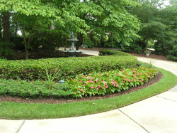 Annual Flowers Raleigh NC