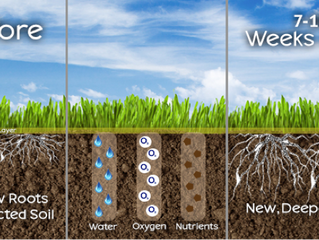 Aeration and Seeding