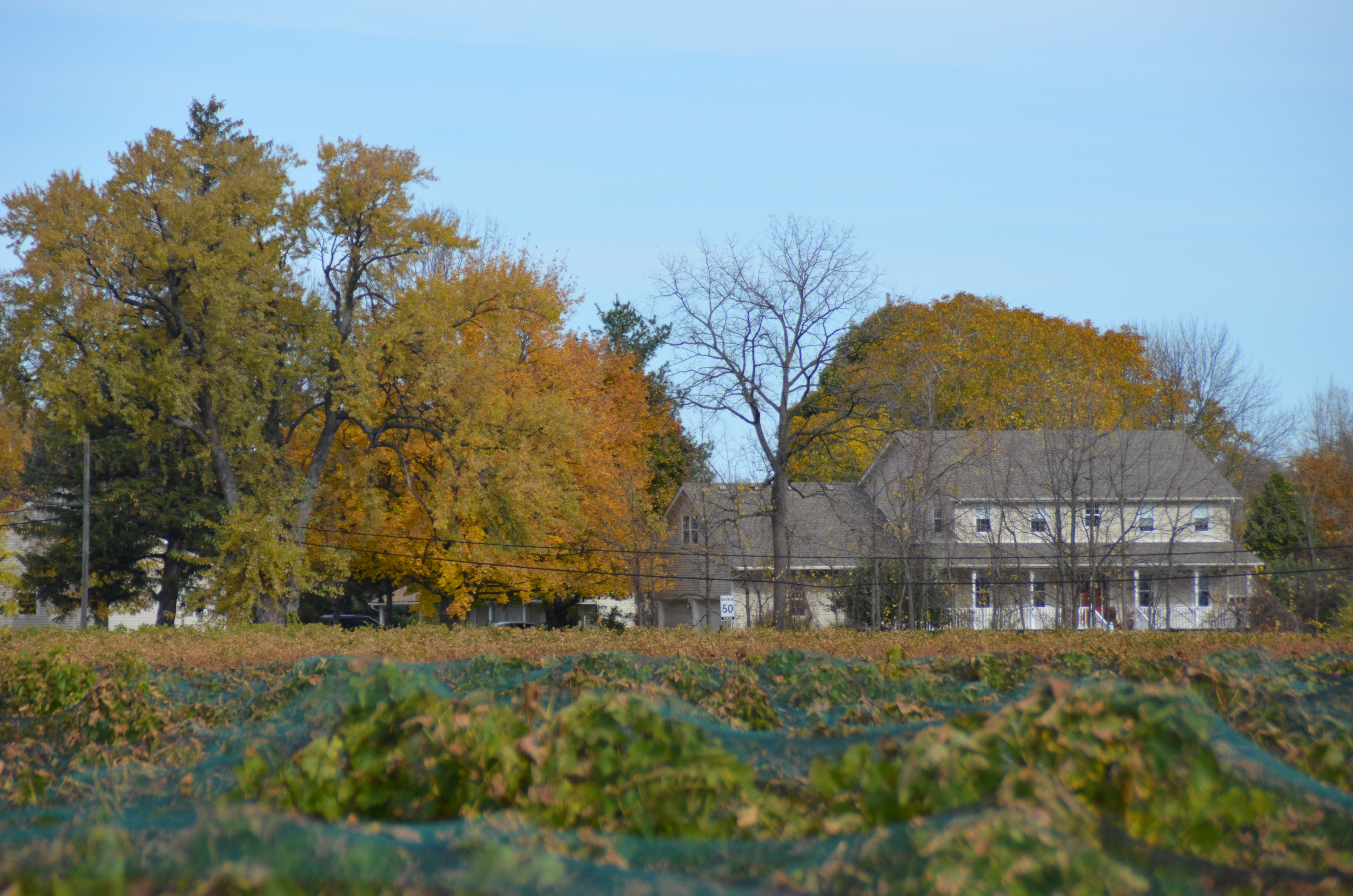 House from across the vineyards