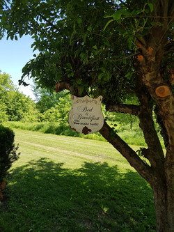 Signage under tree