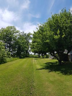 Side garden lawn 2020