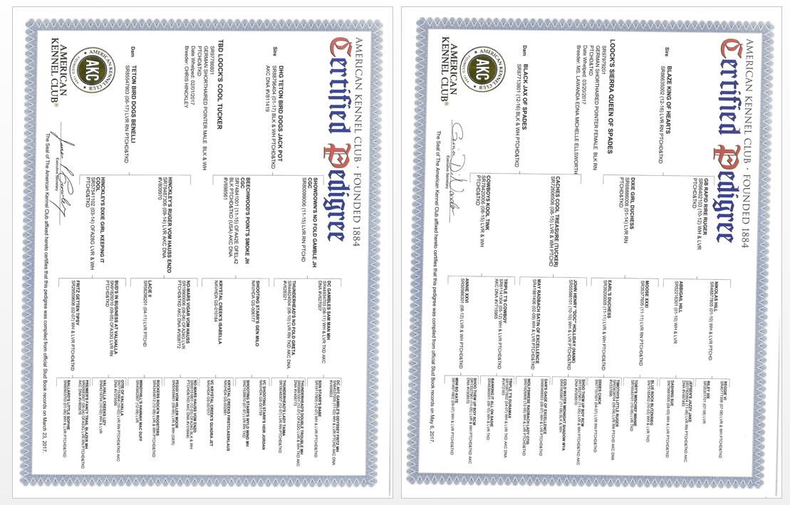 AKC Registration Papers