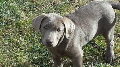 Sage as a puppy