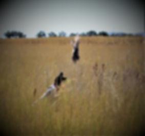 Cloe Hunting 4.JPG