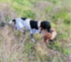 Deb Rambo Puppy.jpg