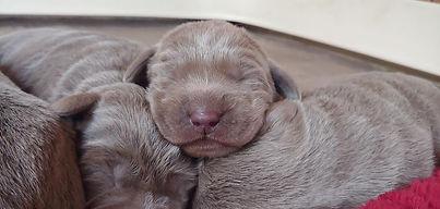 Abby Pup3.jpg