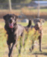 Silver and Charcoal Labs