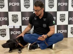 Cachorro é resgatado após aparecer em vídeo sendo maltratado por um casal em Colombo
