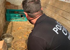 Quase 200 animais em situação de maus-tratos são resgatados em Quatro Barras