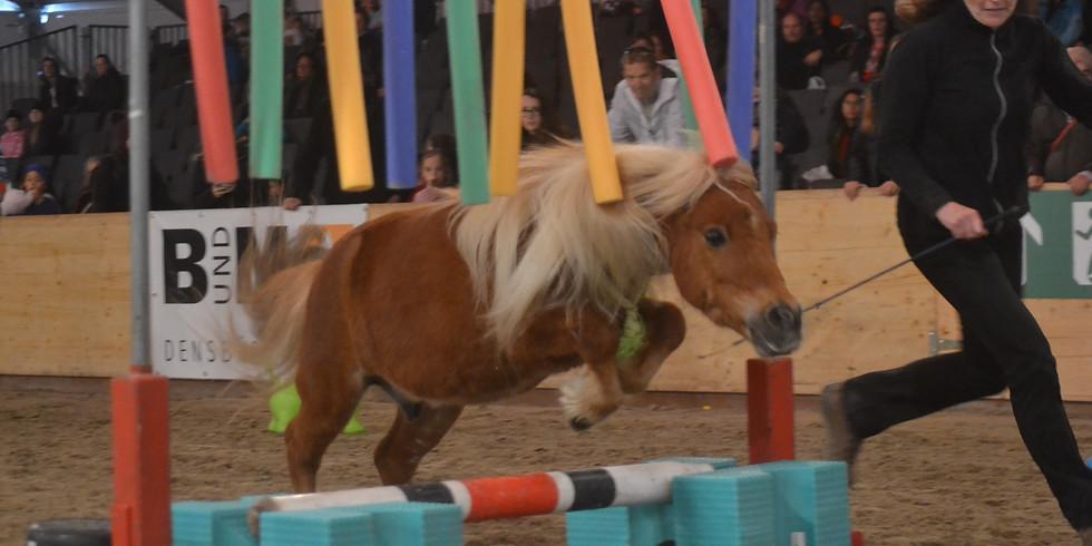 Horse Agility Training in Hessigkofen