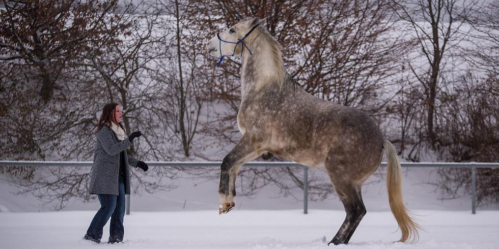 Horse Agility Training