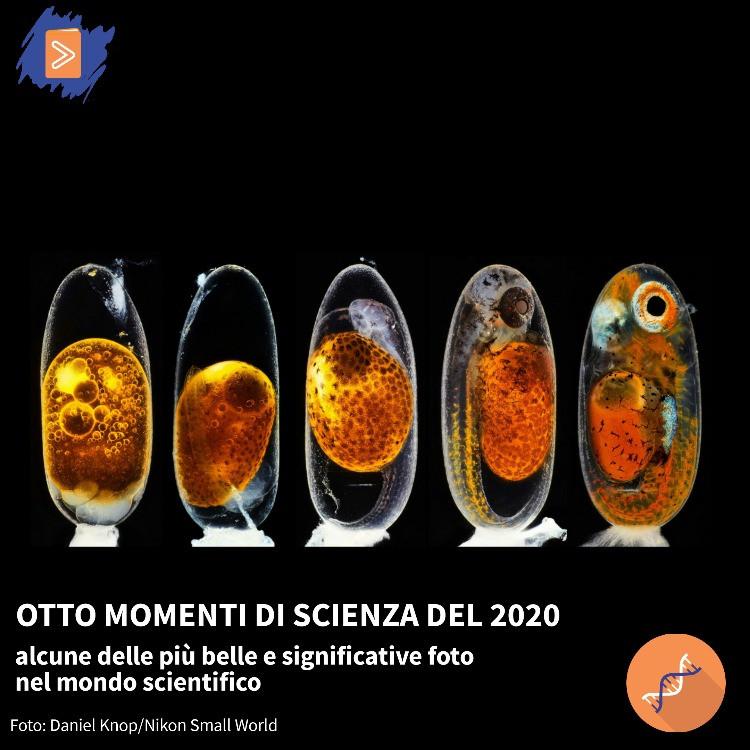 Foto di embrioni di pesci