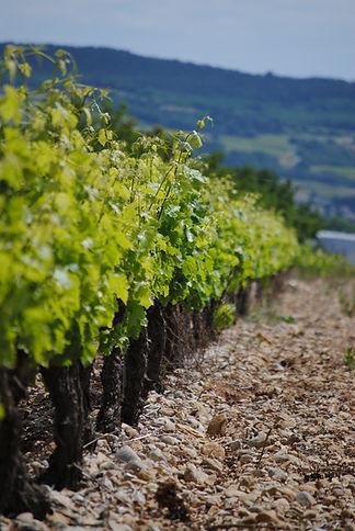 Domaine Les Asseyras - Côtes du Rhône - Tulette