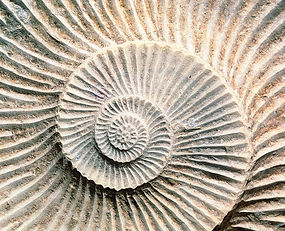 Fossilized Spiral Shell.jpg