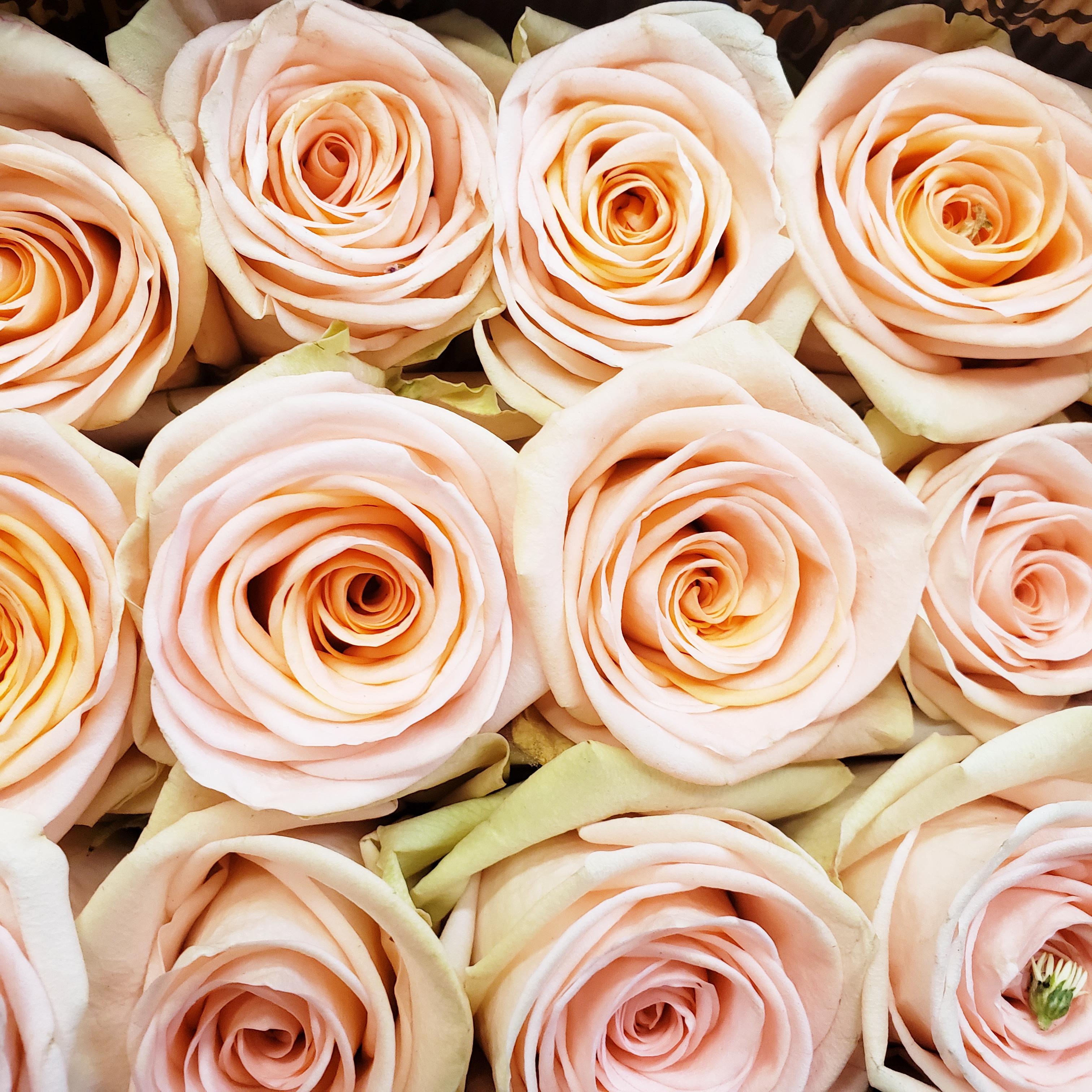 Tiffany rose.jpg