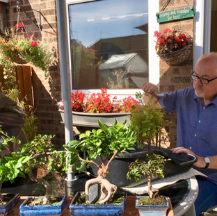 Richard doing Bonsai in the sun Aug 2017-small.jpg