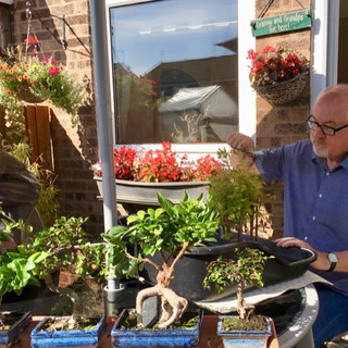 Richard doing Bonsai in the sun Aug 2017-small.jpg