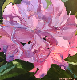 """""""Rhododendron"""""""
