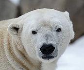Real Polar Headshot.jpg