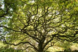 NZ・生命の樹