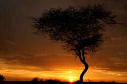 エチオピア・アカシアの樹と夕日