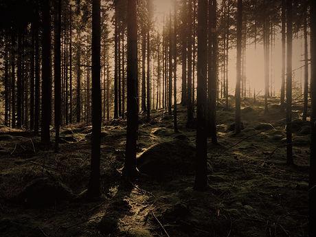 green pine trees_edited.jpg