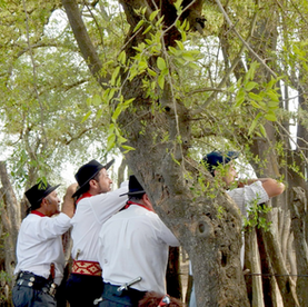 San Antonio de Areco: (Contested) Tradition as a Way of Life