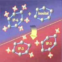 IP6 to IP3