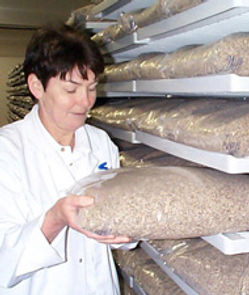 How is red yeast rice made