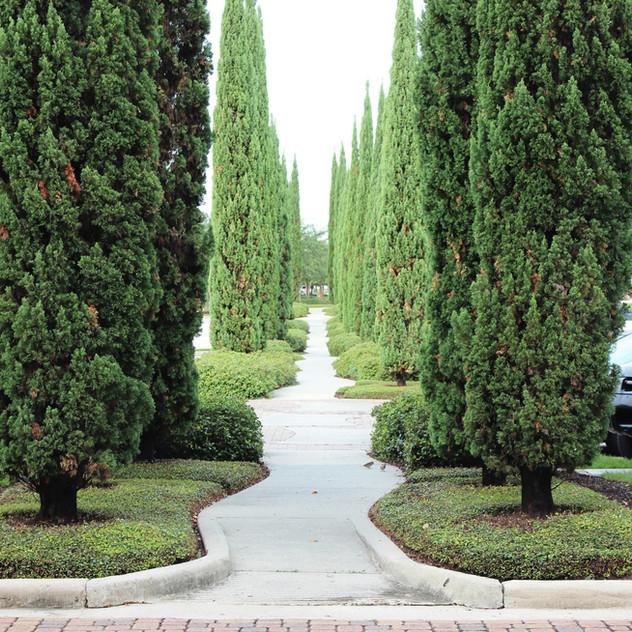 Reich Landscape Architecture, Baton Rouge