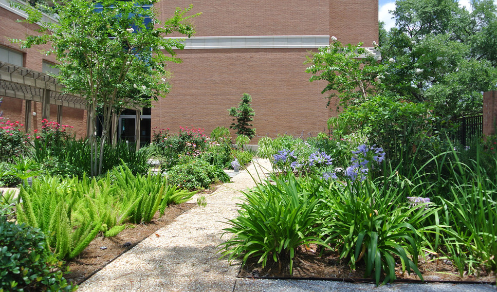 LSU Medical and Innovation Center