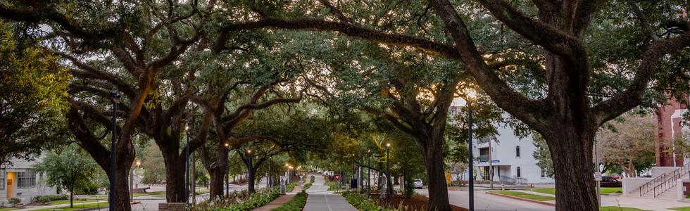 Baton Rouge Downtown Greenway