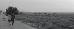 Local Landscape - נוף מקומי