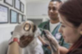 veterinary-doctor-2319417_960_720.jpg