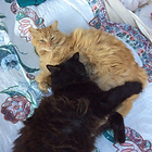 Two cats snuggling and communicating their love for each other