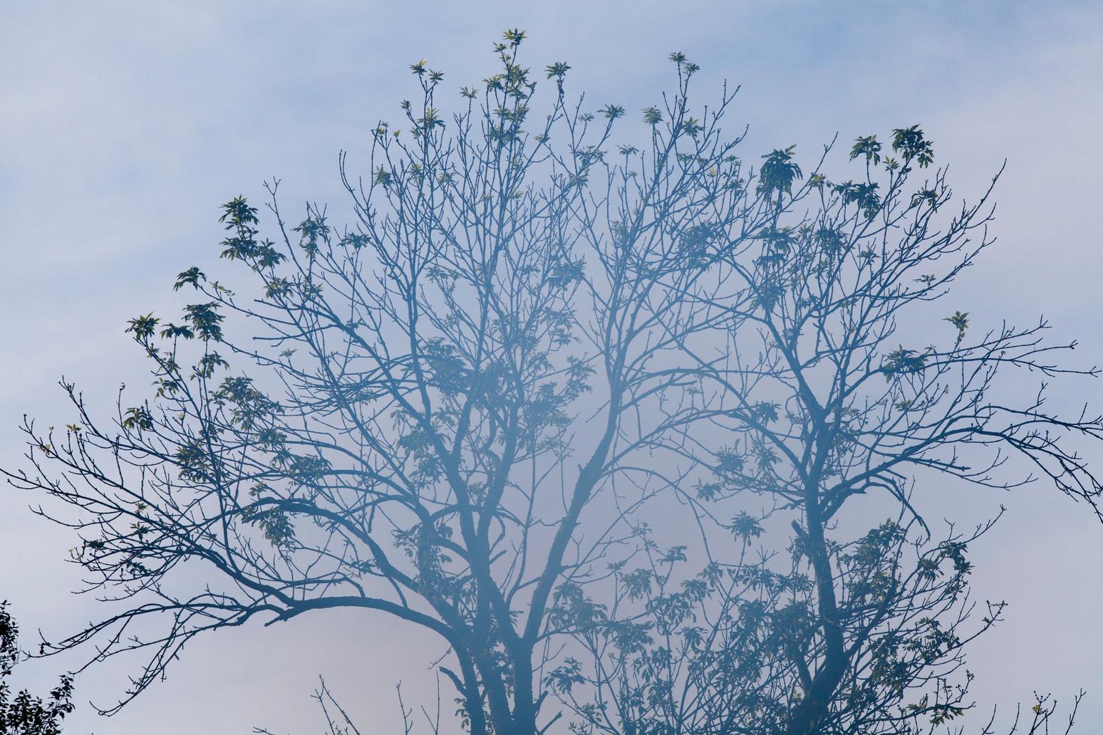 Downey Woodpecker 7:22AM