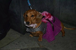 satin n net customized pets frocks_
