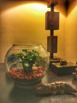 Minimalistic terrarium