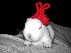 baby rabbit ear warmers