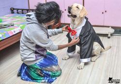 customized raw silk tuxedo for pets